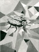 Fly - _ 2013, 23 x 31 cm. Indian Ink and felt-tip pen on paper.